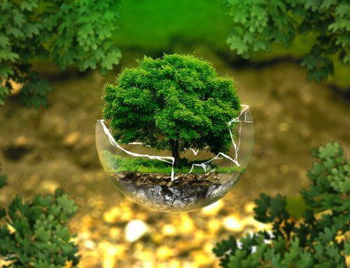 Scurta introducere in dimensiunile de actualitate ale protectiei mediului